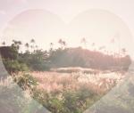 sunsetheart2honeythatsokJoeySummer2014waimanalokahalapondhibiscuswonderlandclaustrophobicparadise