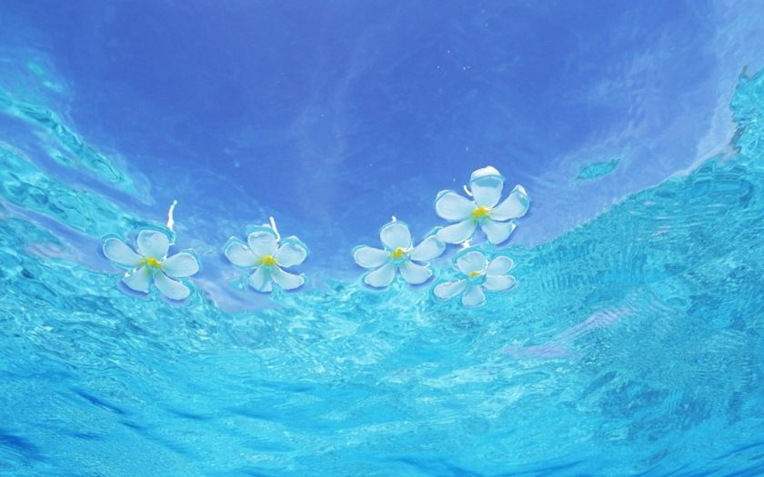 flowers-floating-on-the-water